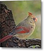 Shes An Early Bird  New Version Metal Print