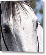 Show Horse At Mule Days Metal Print