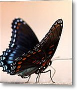 Showing Colors Metal Print