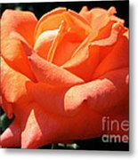 Shreveport Rose Metal Print