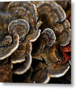 Shrooms Abstracted Metal Print