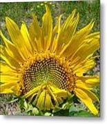 Shy Sunflower Metal Print