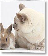 Siamese-cross Cat, Isaac, And Baby Metal Print