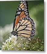 Side Profile Of A Monarch Metal Print