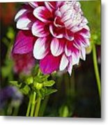 Sideview Metal Print
