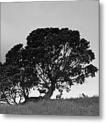Silhouette Of A Tree With Sheep Metal Print