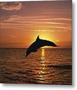 Silhouette Of Leaping Bottlenose Metal Print