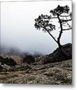 Silhouette Of Tree In Mist Metal Print