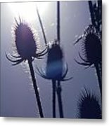 Silhouette Of Weeds Metal Print