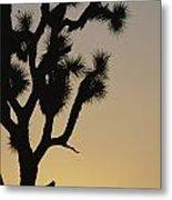 Silhouetted Joshua Tree In Antelope Metal Print