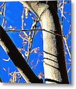 Silk Tree Metal Print