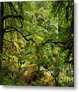Silver Falls Rainforest Metal Print