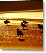 Silver Gulls On Golden Beach Metal Print