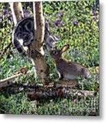 Silver Tabby And Wild Rabbit Metal Print