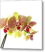 Simplified Orchids I Metal Print