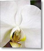 Simply Pure Orchid Metal Print