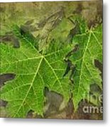 Simply Summer Maple Leaves Metal Print