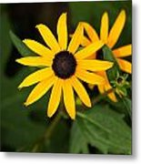 Single Daisy Metal Print