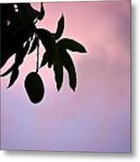Single Mango On A Tree At Twilight Metal Print