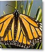Single Monarch Butterfly Metal Print