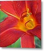 Single Red Lily Closeup Metal Print