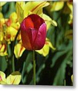 Single Red Tulip Metal Print