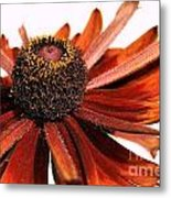 Single Susan Metal Print