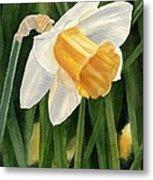 Single Yellow Daffodil Metal Print