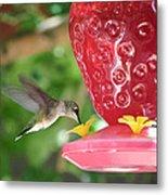 Hummingbird Sipping Metal Print