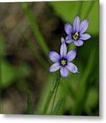 Sisters Of The Purple Plants Metal Print