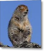 Siting In The Morning Sun Metal Print