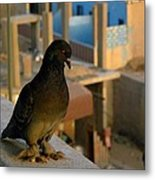 Siwa Showoff Metal Print