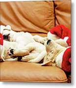 Six Puppies Sleep On Sofa, Some Wear Santa Hats Metal Print