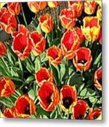 Skagit Valley Tulips 10 Metal Print