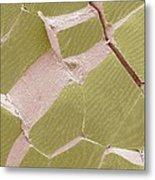 Skeletal Muscle Fibres, Sem Metal Print