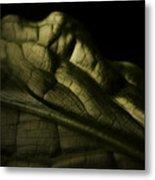 Skunk Cabbage Leaf Metal Print
