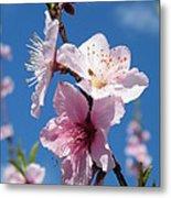 Sky High Cherry Blossoms Metal Print