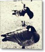 Sleeping Ducks Metal Print by Joana Kruse
