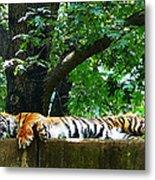 Sleeping Tiger Metal Print