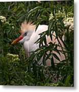 Sleepy Egret In Elderberry Metal Print