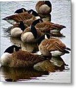 Sleepy Geese Metal Print