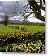 Slievenamon, Ardsallagh, Co Tipperary Metal Print