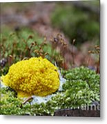Slime Mould Metal Print