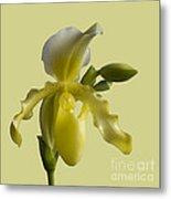 Slipper Orchid Metal Print