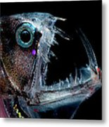 Sloanes Viperfish Metal Print