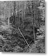 Slovenian Forest In Black And White Metal Print