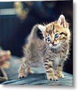 Small Cute Kitten Metal Print