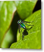 Small Green Fly Metal Print