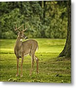 Small Stag Metal Print