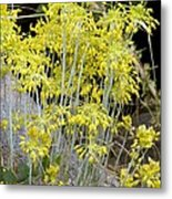Small Yellow Onion (allium Flavum) Metal Print